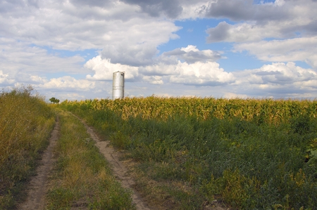 municipal utilities: water tower in a cornfield near the country road.