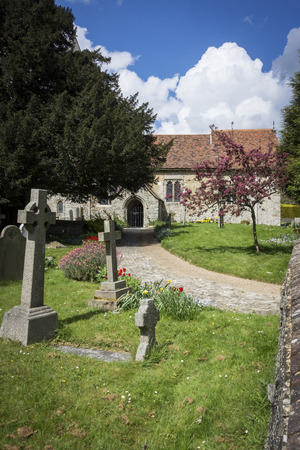 buttercups: Pathway to Saint Martin of Tours Church in the village of Detling Kent UK