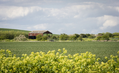 kent: A barn in a field in the Kent Countryside UK