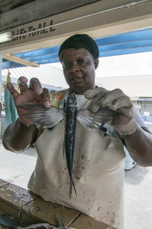 barbadian: BRIDGETOWN, BARBADOS, 21 DECEMBER 2015 - Barbadian lady holding a flying fish by its wings Editorial