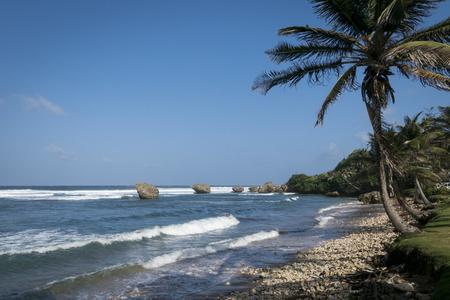 windward: Coral reef boulders on the beach at Bathsheba, Barbados Stock Photo