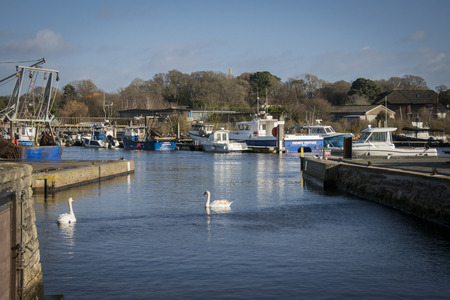 View of the harbour and swans at Lymington, New Forest, Hampshire, UK 에디토리얼