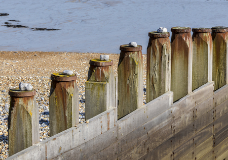 A row of groynes on the beach with a stone placed on the top of each one Standard-Bild - 121438213
