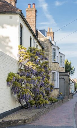 Purple wisteria in bloom, climbing up the wall of a house in the ancient village of Brasted, Kent, UK Banque d'images
