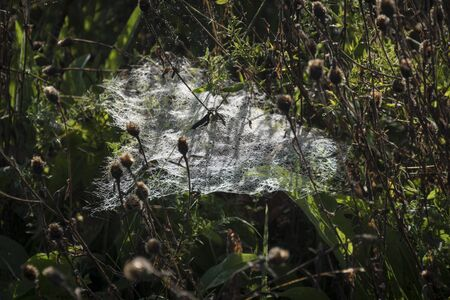 A sheet of cobweb among dead wild flowers, backlit by the sun