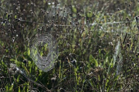 A round cobweb covered in dew drops, among dead wild flowers, backlit by the sun