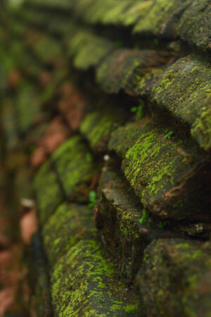 Old brick and moss photo