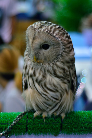 nocturnal: Owls are nocturnal animals. Stock Photo