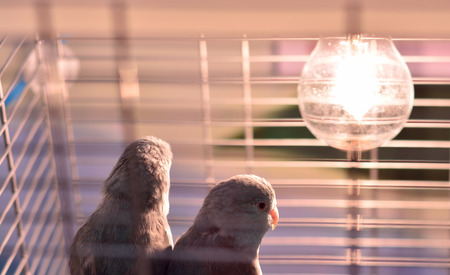 solitariness: Bird Resort prizes that are coupled together in a cage.
