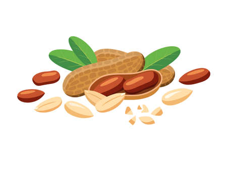 Vector peanuts whole and pieces in cartoon style for label template, snacks packaging emblem