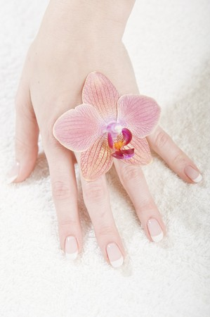 Beautiful hands with perfect french manicure and orchid Stock Photo