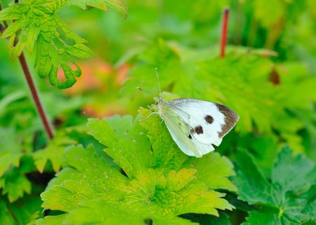 Butterfly on green leaf photo