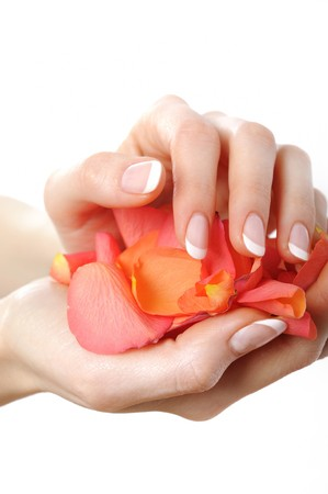 Beautiful hand with perfect french manicure on treated nails holding rose flower petals. isolated on white background