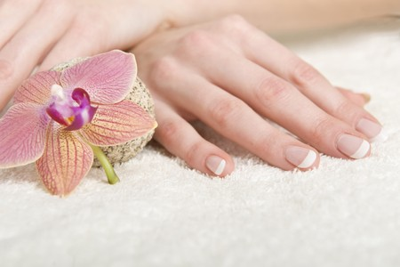 Beautiful hands with perfect french manicure and orchid Stock Photo - 7609934