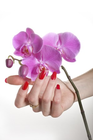 Beautiful hand with red manicure holding pink orchid flower. isolated Stock Photo - 7610047