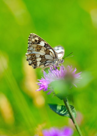 Beautiful butterfly sitting on a flower in a green garden. blurred background photo