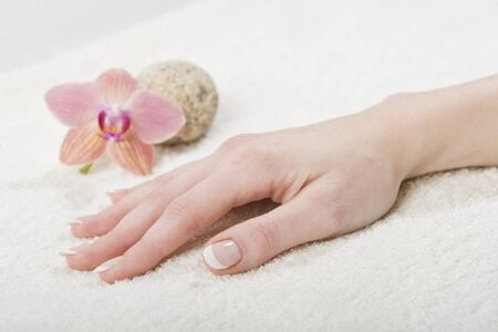 Beautiful hands with perfect french manicure and orchid Stock Photo - 7722267