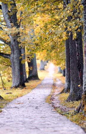Beautiful autumn nature landscape in yellow park