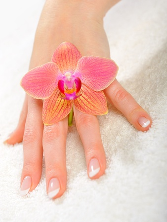 beautiful hand with perfect french manicure on treated nails photo