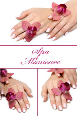collage.Beautiful hand with perfect manicure and purple orchid flower  photo