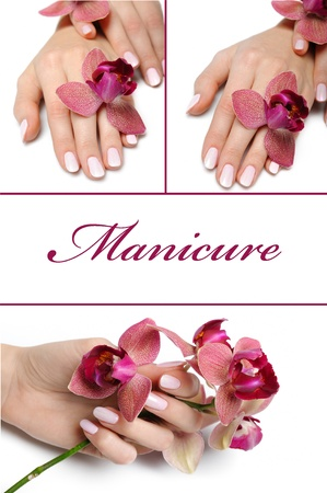 manikyr: collage.Beautiful hand with perfect manicure and purple orchid flower