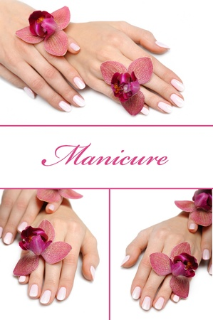 Beautiful hand with perfect manicure and purple orchid flower Stock Photo