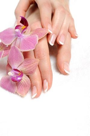 manik�re: Sch�ne Hand mit perfekten Nagel Franz�sisch Manik�re und lila Orchidee Blumen. isolated on white background