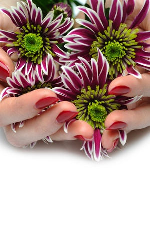 Beautiful manicured hands with bunch of exotic purple flowers. isolated photo