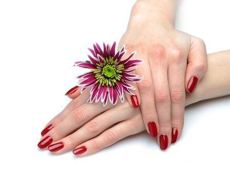 flores exoticas: Hermosa mano con perfecto clavo rojo manicura y violeta flores ex�ticas. aislados en fondo blanco