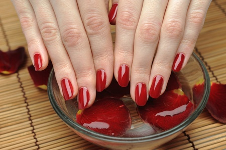 Beautiful hand with perfect nail red manicure and rose petals. Stock Photo - 9160613