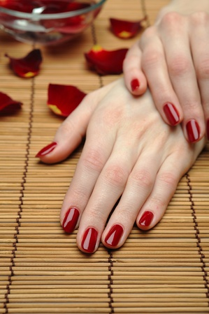 Beautiful hand with perfect nail red manicure and rose petals. Stock Photo - 9313964