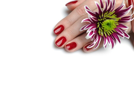 Beautiful hand with perfect nail red manicure and violet exotic flowers. isolated on white background photo
