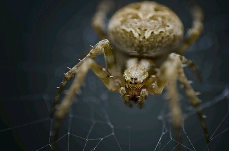 net: Spider on the web