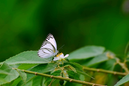 white: White butterfly on a white flower Stock Photo