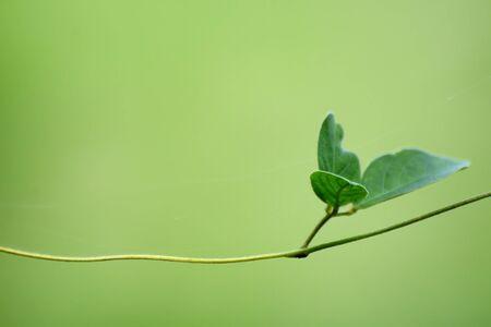 green plants: Leaf of life