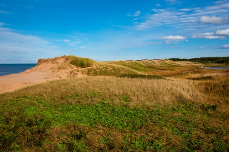 Grassy side of sand dunes against blue sky