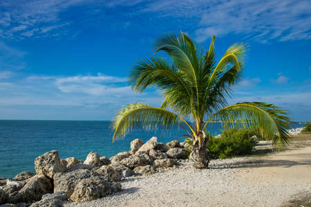 Tropical paradise, Palm trees, blue sky and aqua ocean photo