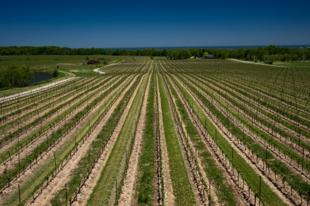 Vineyard view in early spring Stock Photo - 17486202