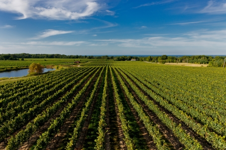 Vineyard   Winery field overview Stok Fotoğraf