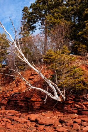 Dramatic shore erosion, red cliffs eroding away Stock Photo