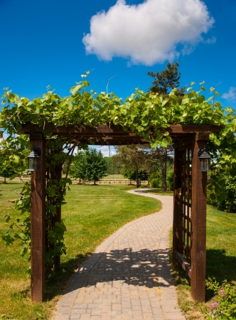 Trellis covered in grape vines leading into a vineyard