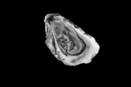 Oyster in the half shell with a solid black background