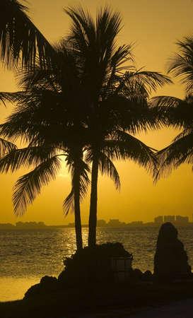 backlite: Backlite Palm Tree Stock Photo