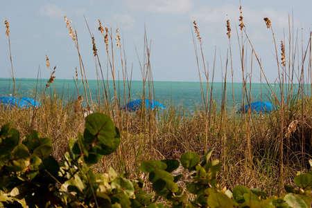 sea oats: Sea Oats with Blue Umbrellas