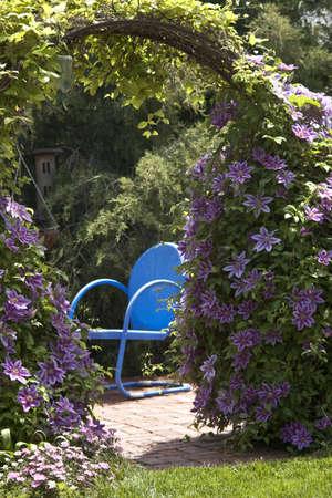 vacancier: Blue Chair Clematis Fleurs Banque d'images