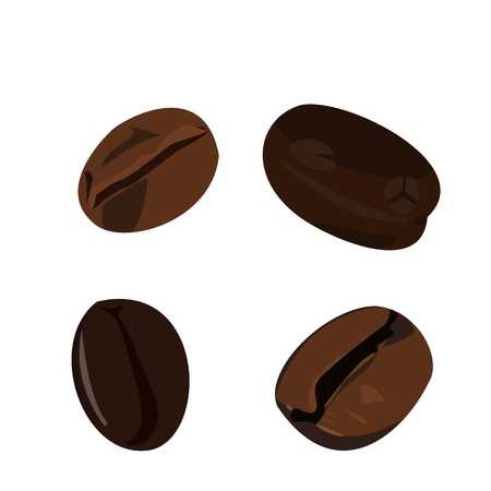 brewed: Realistic illustration coffee bean