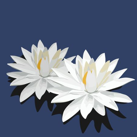 water lilies: loto