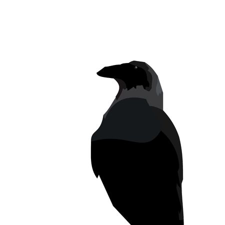 carrion: Realistic illustration of black raven