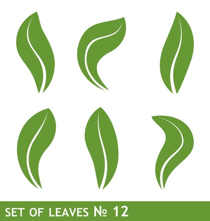 Illustration of leaves Vector