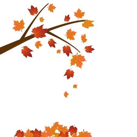 dode bladeren: Tak van esdoorn, herfst blad vallen Stock Illustratie